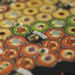 Mariposas: A királylepkék lenyűgöző vándorútja társasjáték